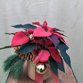 Weihnachtsfunkeln klein